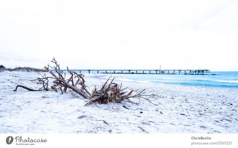 Strandgut an der Ostseeküste Ferne Freiheit Meer Natur Landschaft Sand Wasser Küste Menschenleer ästhetisch außergewöhnlich maritim achtsam ruhig einzigartig
