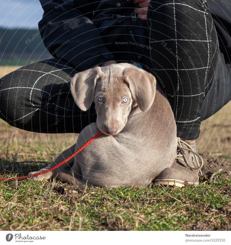 Hallo Photocase, ich bin Ben Lifestyle Stil Freizeit & Hobby Spielen Ausflug Mensch feminin Natur Erde Frühling Schönes Wetter Gras Wiese Tier Haustier Hund