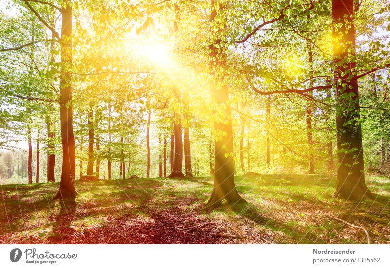 Frühlingssonne im Buchenwald Ausflug wandern Natur Landschaft Pflanze Sonne Schönes Wetter Baum Wald Wege & Pfade Erholung Wachstum Freundlichkeit frisch