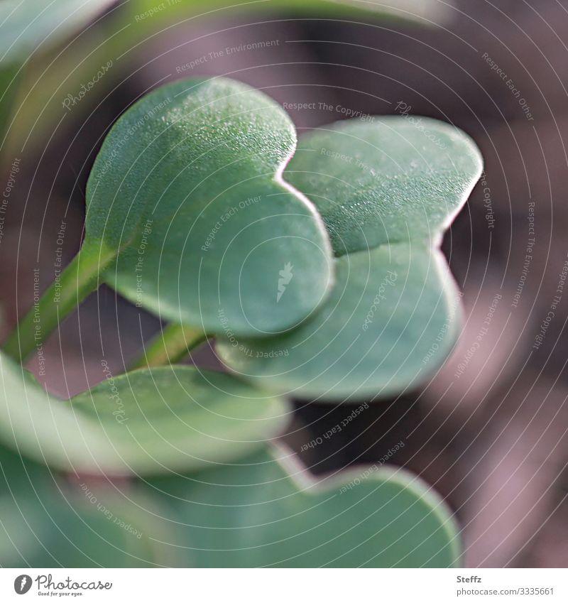 Radieschen bald da Lebensmittel Gemüse Bioprodukte Vegetarische Ernährung Vegane Ernährung Gesunde Ernährung Umwelt Natur Frühling Pflanze Blatt Nutzpflanze