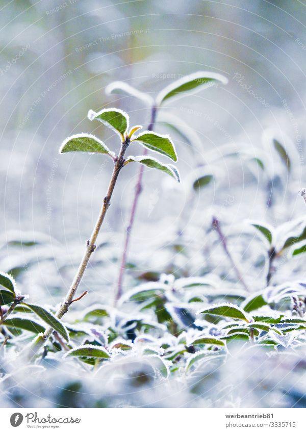Eisanlagen im Winter geschlossen Umwelt Natur Pflanze Frost Gras Sträucher Garten Stimmung Verantwortung gefroren Schnee Wachstum Nahaufnahme Detailaufnahme