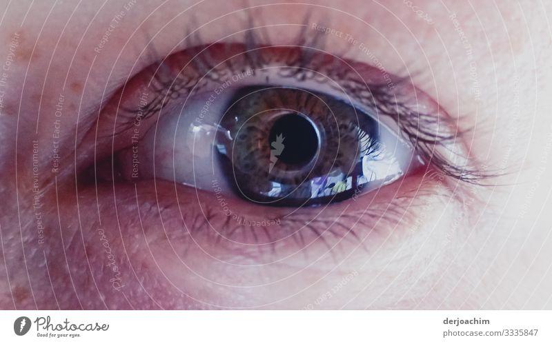 Auge, Wimpern , mit Spiegelung Porträt Farbfoto Natur schön wunderschön Tag Lifestyle feminin charmant Stil Mähne Zauberer Moräne rote Lippen französischer Stil