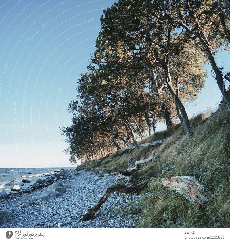 Schiefe Bahn Umwelt Natur Landschaft Wasser Wolkenloser Himmel Horizont Herbst Wind Baum Gras Sträucher Küste Strand Ostsee Insel Fehmarn Steinstrand Holz