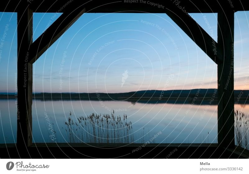 Blaue Stund hat Gold im Mund | Abendstimmung am See Abenddämmerung Stimmung Dämmerung Himmel Sonnenuntergang Natur Landschaft Menschenleer Wasser ruhig Umwelt