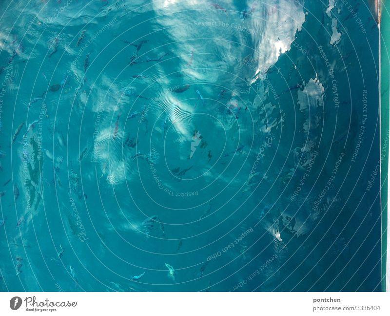 Fischschwarm schwimmt im becken. Sonnenstrahlen fallen ein Natur Wasser Sommer Wildtier Aquarium Tiergruppe Schwarm Schwimmen & Baden blau Licht