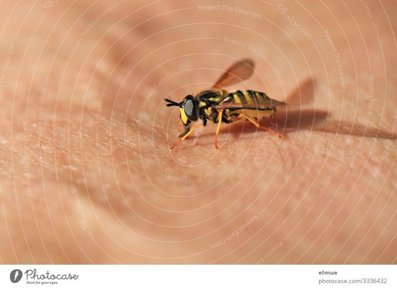 Rüsselkontakt Tier schwarz Leben gelb klein Angst Wildtier Haut Flügel berühren Gelassenheit Insekt Vertrauen Irritation bizarr Ekel