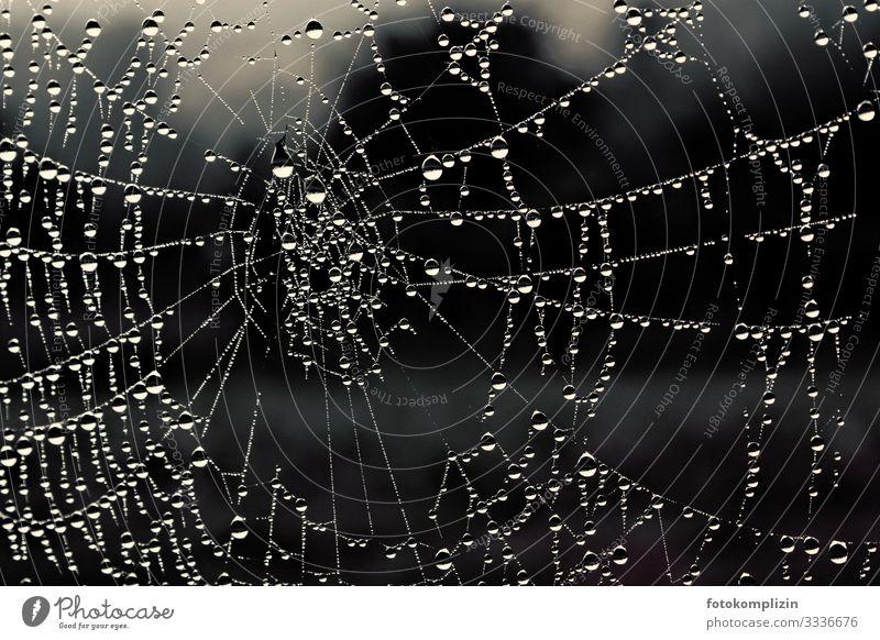 spinnennetz perlen Natur Klima Regen Spinnennetz Wasser Linie Netz Netzwerk Tropfen Spirale Kreis berühren glänzend leuchten Tauziehen ruhig unbeständig
