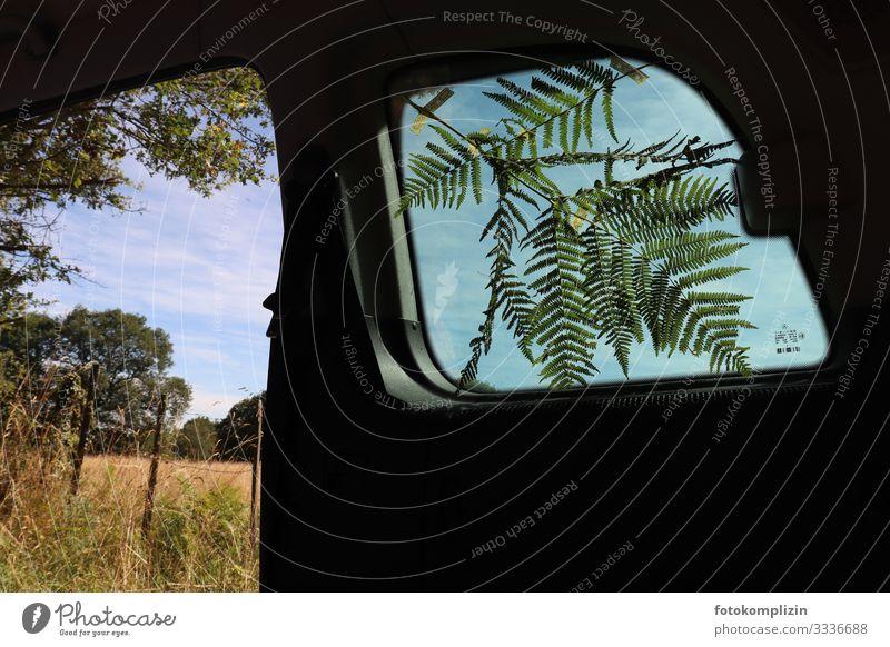 Farnzweig am Autofenster Farnblatt roadtrip Urlaubsfoto ausflug ins grüne Ausflug im Grünen Naturliebe landliebe Umwelt innen außen Außenaufnahme Grünpflanze