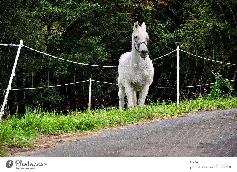 Eingebunden Reiten Reitsport Umwelt Natur Pflanze Baum Gras Wiese Weide Straße Wege & Pfade Tier Nutztier Pferd Tiergesicht 1 Zaun beobachten Neugier braun grau
