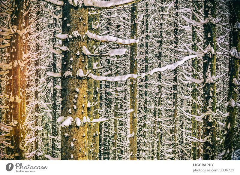 Schneebedeckte Bäume Natur Wasser Baum Freude Wald Winter Umwelt Schneefall wandern Angst Wetter Erde Abenteuer Wind Jahreszeiten