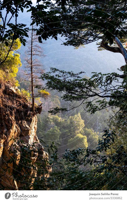 Festhalten am Boden Umwelt Natur Landschaft Pflanze Frühling Schönes Wetter Baum Blatt Park Wald Felsen Wasserfall Gelassenheit Verzweiflung Zufriedenheit