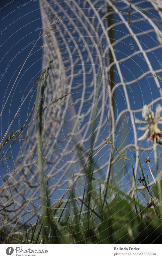 fussball Sport Ballsport Sportler Sportmannschaft Torwart Schiedsrichter Erfolg Spielen Farbfoto Außenaufnahme Tag Froschperspektive