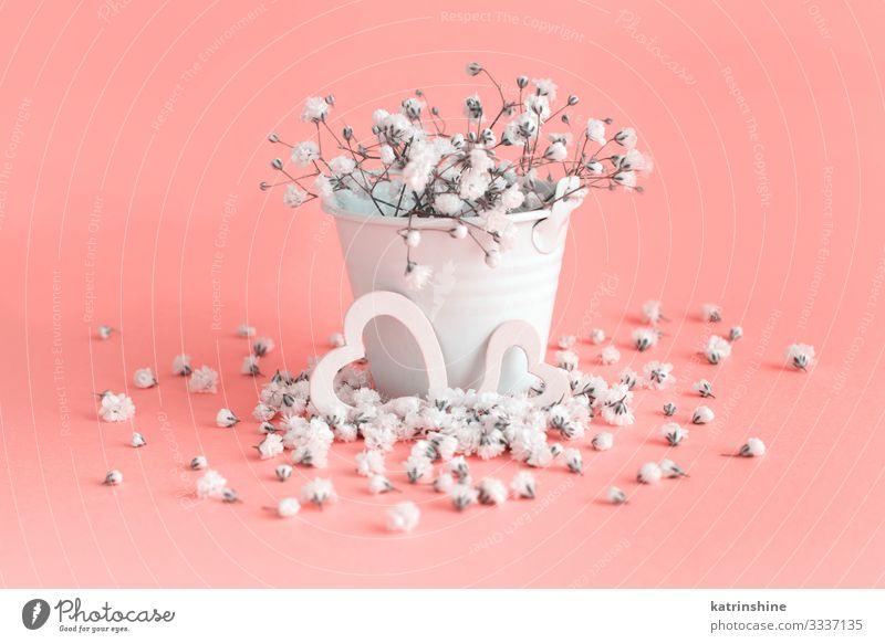 Kleine weiße Blumen und Herzen auf rosa Hintergrund Design Dekoration & Verzierung Hochzeit Frau Erwachsene Mutter Kreativität romantisch hellrosa Eimer Pastell