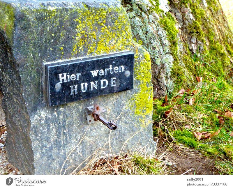 freier Hundewarteplatz ... Schild Schrift warten draußen anbinden Haken Warteplatz Stein menschenleer Buchstaben Schilder & Markierungen Hinweisschild