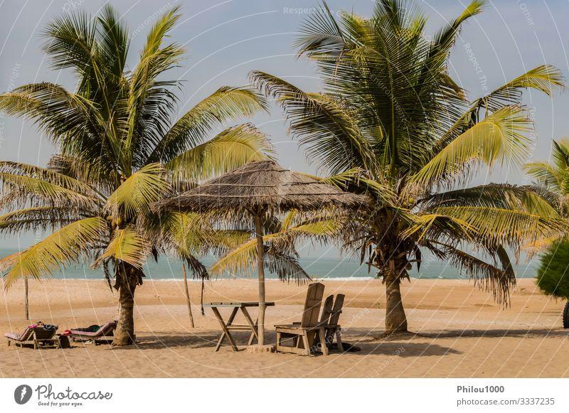 Zwei Stühle und ein Couchtisch unter einer Palme schön Erholung Ferien & Urlaub & Reisen Tourismus Sommer Strand Meer Stuhl Tisch Geldinstitut Sand Himmel