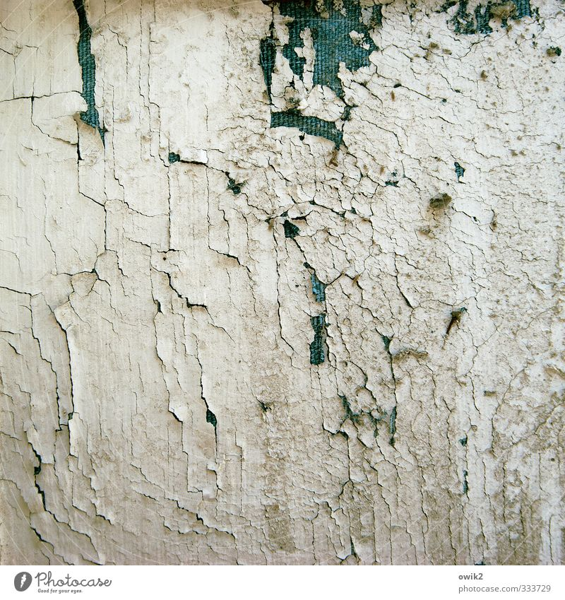 Sturmfrei alt Farbstoff Holz Textfreiraum Riss trashig Zahn der Zeit Farbrest