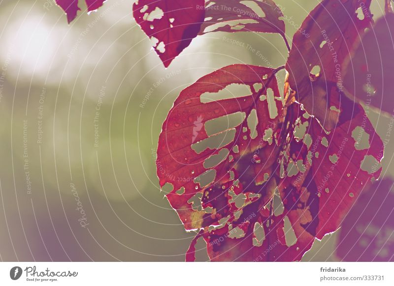 rosa blätter Natur grün Pflanze Baum rot Blatt Wald Wärme Herbst Frühling Essen braun Park Vergänglichkeit Romantik
