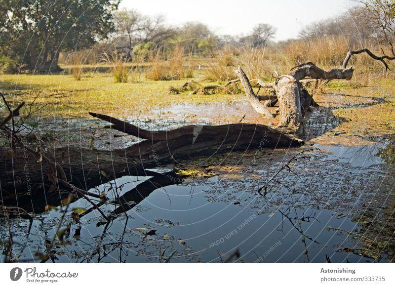 gefallen Umwelt Natur Landschaft Pflanze Wasser Himmel Sommer Wetter Schönes Wetter Wärme Baum Gras Sträucher Wildpflanze exotisch Wald Moor Sumpf Teich