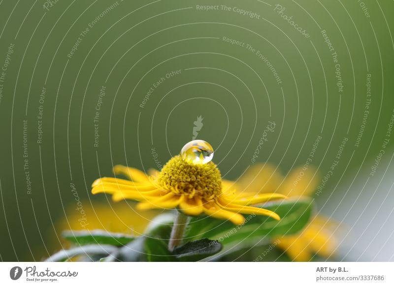 sanft gebettet Natur Pflanze Blume Sonnenhut Garten fallen glänzend leuchten verblüht gelb grün Gefühle Stimmung Fröhlichkeit Zufriedenheit Lebensfreude