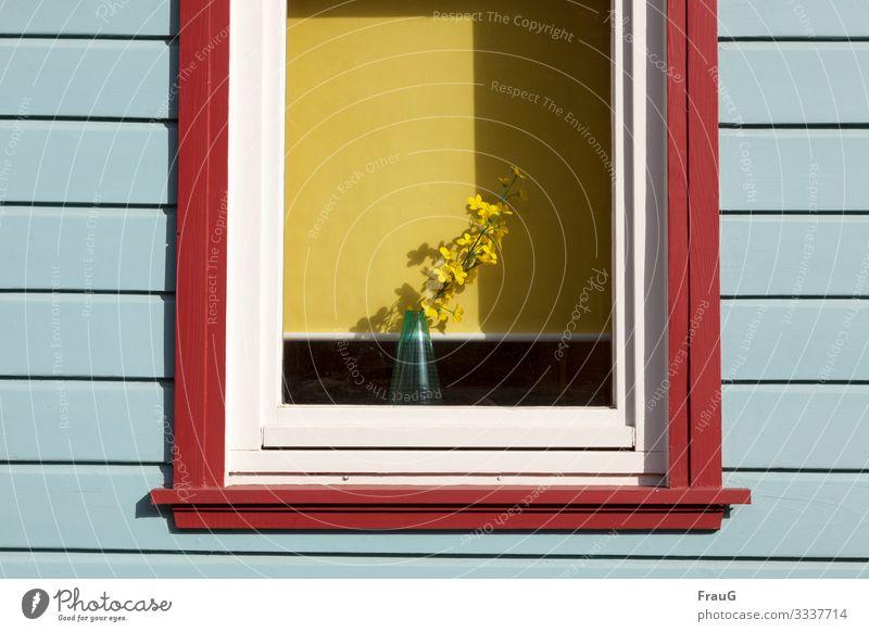 Frühling im Fenster Blume Holz gelb Blüte Fassade Häusliches Leben Dekoration & Verzierung Vase Frühlingsgefühle Rollo