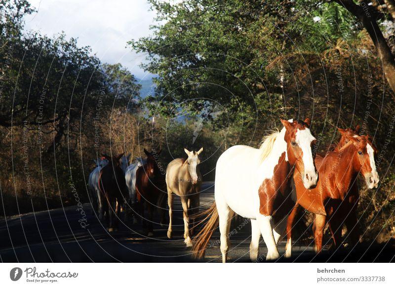 das glück der erde liegt auf dem rücken der pferde fantastisch Tierliebe Fell Umwelt Natur Ausflug Tourismus Ferien & Urlaub & Reisen beeindruckend Abenteuer