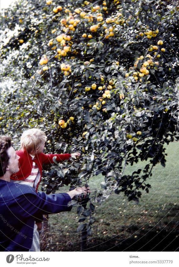 Erntezeit Kleinkind Frau Erwachsene Mutter 2 Mensch Umwelt Natur Schönes Wetter Baum Frucht Wiese Jacke brünett blond festhalten Blick Lebensfreude
