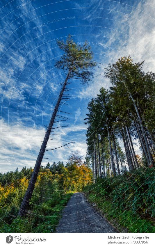Wanderweg in den Schweizer Alpen mit hohem Baum an einem sonnigen Tag schön Ferien & Urlaub & Reisen Tourismus Abenteuer Sommer wandern Umwelt Natur Landschaft