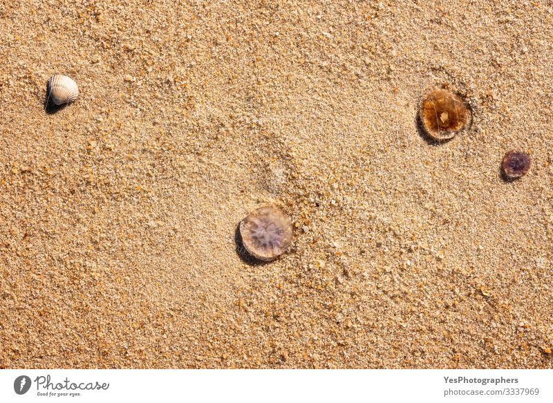Quallen und Muscheln auf Sand in Nahaufnahme. Hintergrund zum Strand Sommer Schönes Wetter Küste Nordsee 3 Tier exotisch Friesische Insel Deutscher Strand