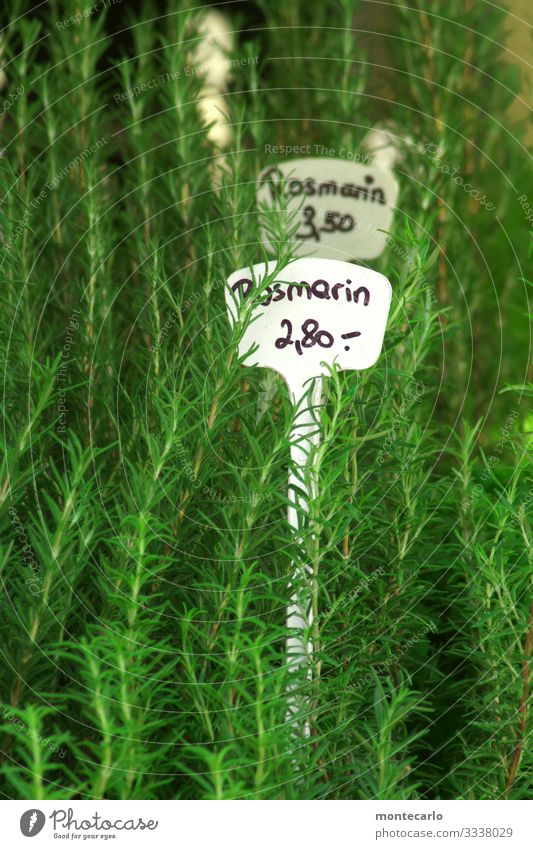 Rosmarin Kräuter & Gewürze Ernährung Vegetarische Ernährung Pflanze Grünpflanze Nutzpflanze Wildpflanze Topfpflanze dünn frisch hoch Spitze wild weich grün
