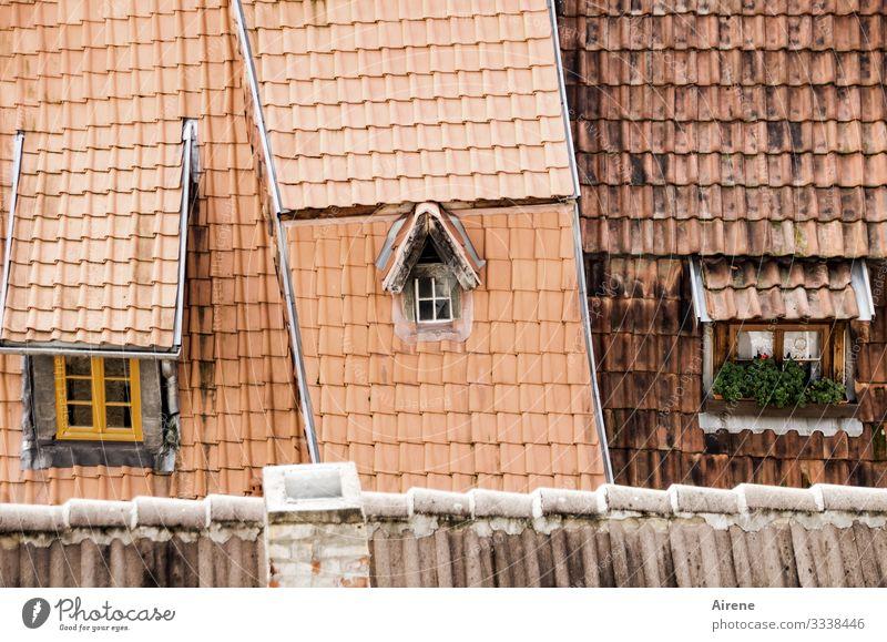 wenig Ausblick, wenig Einblick Dach Tag Dachgiebel Tradition authentisch historisch retro gemütlich altfränkisch Dachschräge Dachziegel ziegelrot Ziegeldach