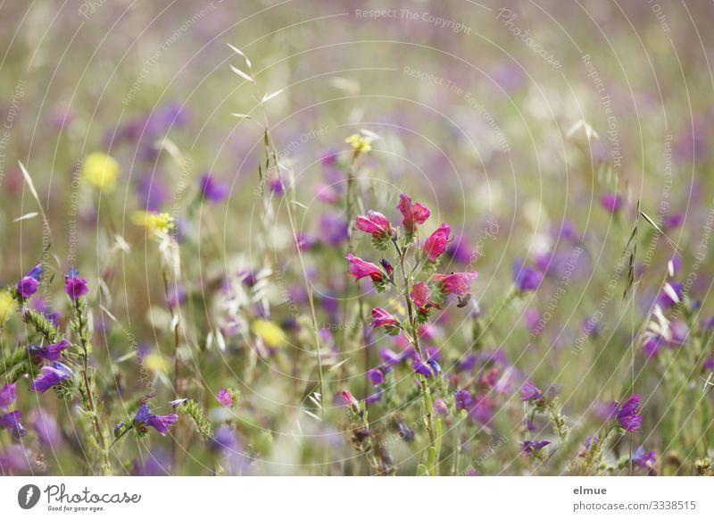 ein Hauch Sommer Natur Pflanze schön Erholung Blüte natürlich Wiese Glück Design wild Park träumen Wachstum Lebensfreude Beginn