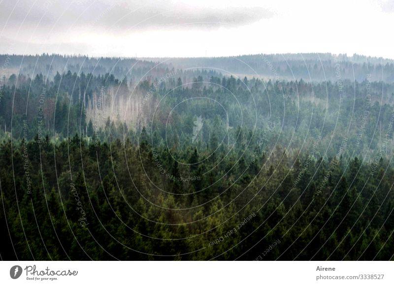 Klimawandel | kahle Stellen im Harz Panorama (Aussicht) Totale Tag Menschenleer Außenaufnahme Gedeckte Farben Farbfoto Trauer Einsamkeit trist dunkel Bergwald