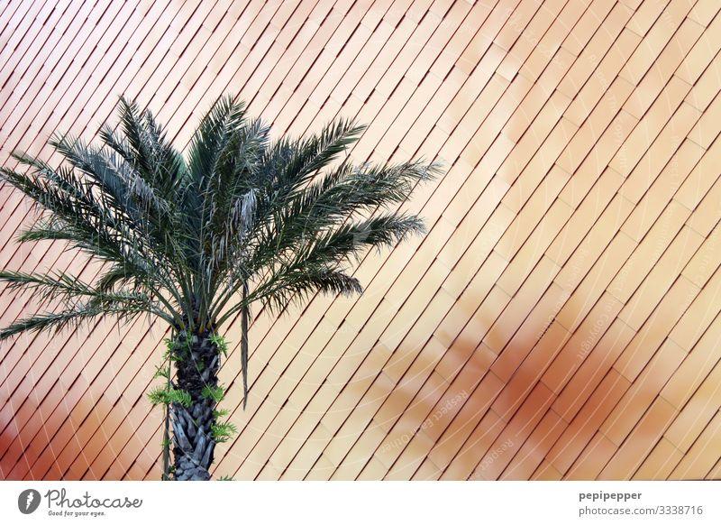 palme Ferien & Urlaub & Reisen Tourismus Pflanze Baum Blatt Grünpflanze Palme Park Mauer Wand Fassade Linie orange Farbfoto Nahaufnahme Menschenleer Tag