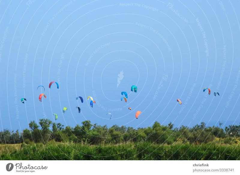 Viele Drachen über Wald vor blauem Himmel Lifestyle Freizeit & Hobby Ferien & Urlaub & Reisen Tourismus Sommerurlaub Sonne Strand Meer Sport Wassersport fliegen