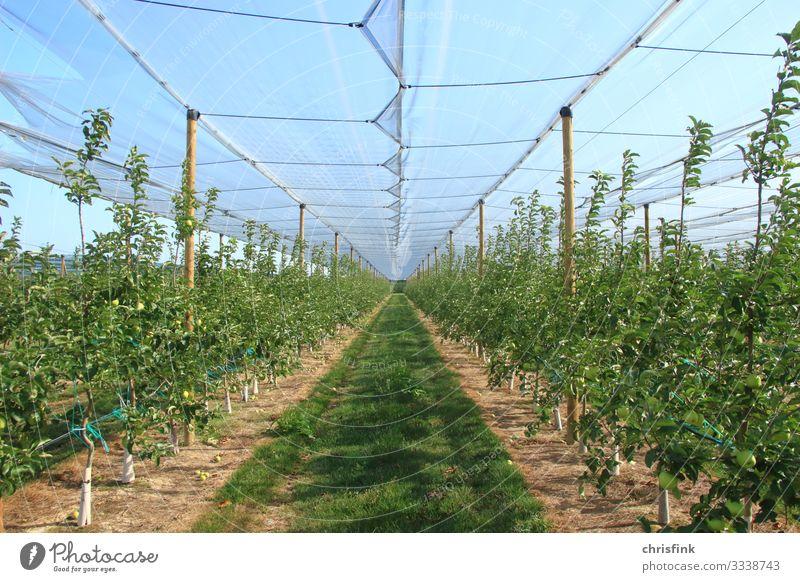 Gewächshaus mit grünen Pflanzen Lebensmittel Frucht Apfel Ernährung Wellness Landwirtschaft Forstwirtschaft Umwelt Natur Klima Klimawandel Garten Wachstum