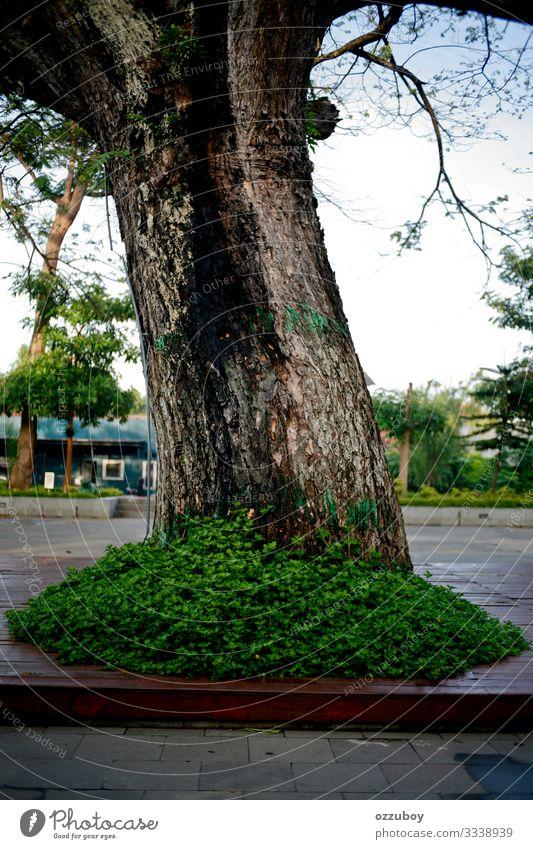 Baum im Park Umwelt Natur Pflanze Urelemente Erde Frühling Herbst Klima groß Sauberkeit Stil Hintergrundbild Farbfoto Strukturen & Formen Menschenleer Tag