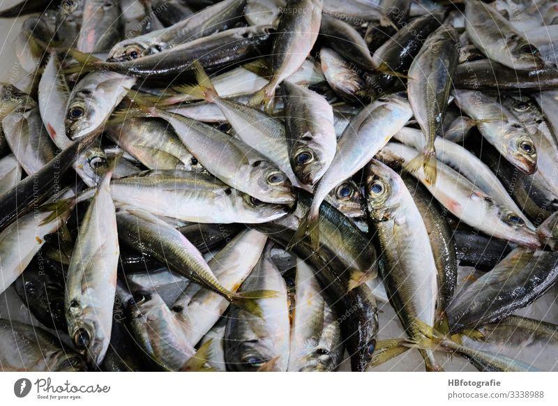 Fischmarkt Umwelt Natur Küste Meer Tier frisch Totes Tier Tote Fische Fischereiwirtschaft sardellen Sardinen Farbfoto Innenaufnahme Kunstlicht