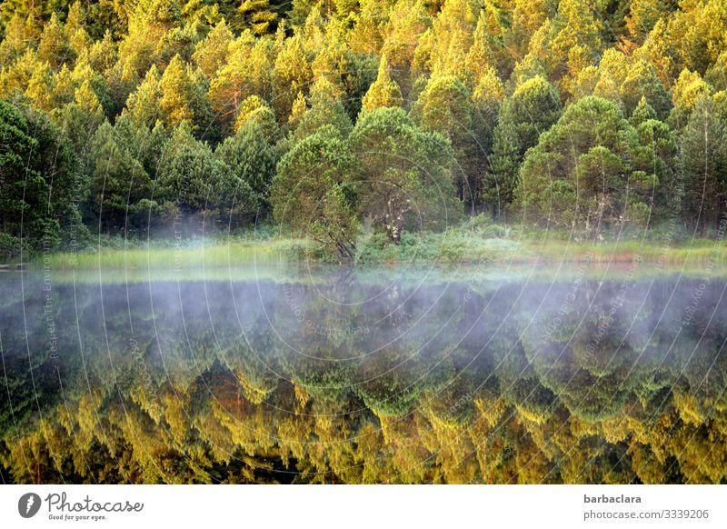 Nebelschleier Bäume Schwarzwald Herbst herbstlich Spiegelung Laubwald Laubbaum Wasser See Wasserspiegelung Wasseroberfläche Natur Naturaufnahme Naturliebe