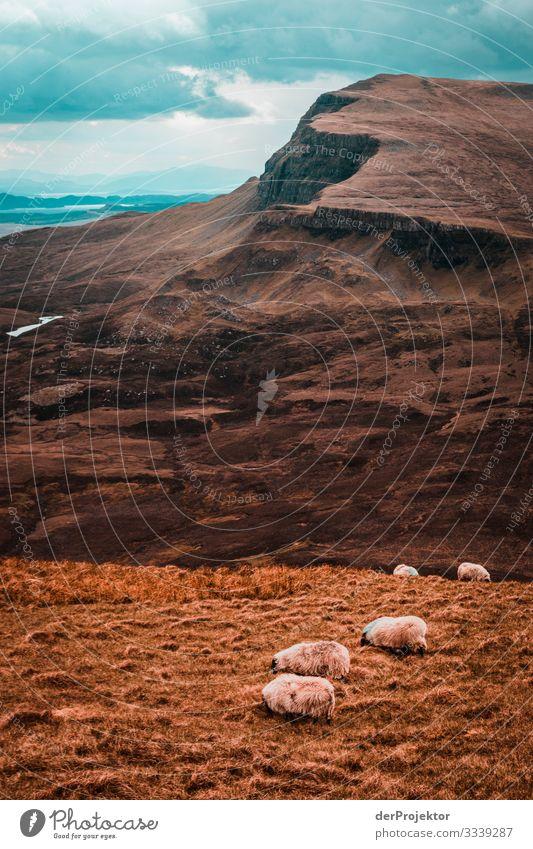 Schafe auf Isle of Skye Panorama (Aussicht) Starke Tiefenschärfe Totale Kontrast Schatten Zentralperspektive Licht Textfreiraum unten Textfreiraum Mitte Tag