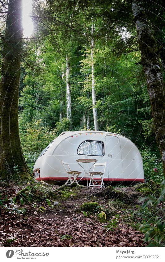 Oldtimer-Wohnwagen Lifestyle Stil harmonisch ruhig Ferien & Urlaub & Reisen Camping Sommer Natur Erde Schönes Wetter Moos Wildpflanze Wald Erholung träumen