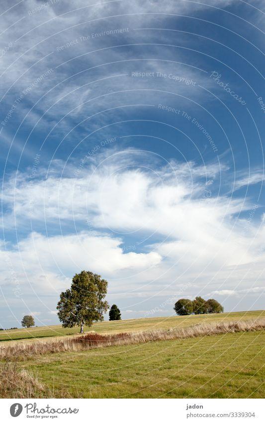 landschaft mit bäumen, blauer himmel, weisse wölkchen, wunderbar. Baum Natur Himmel Landschaft Feld Pflanze Tag Außenaufnahme Menschenleer Umwelt natürlich Gras