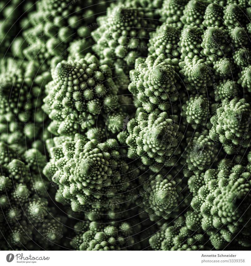 Broccoli Nutzpflanze Pflanze Bioprodukte Ernährung Gemüse Lebensmittel