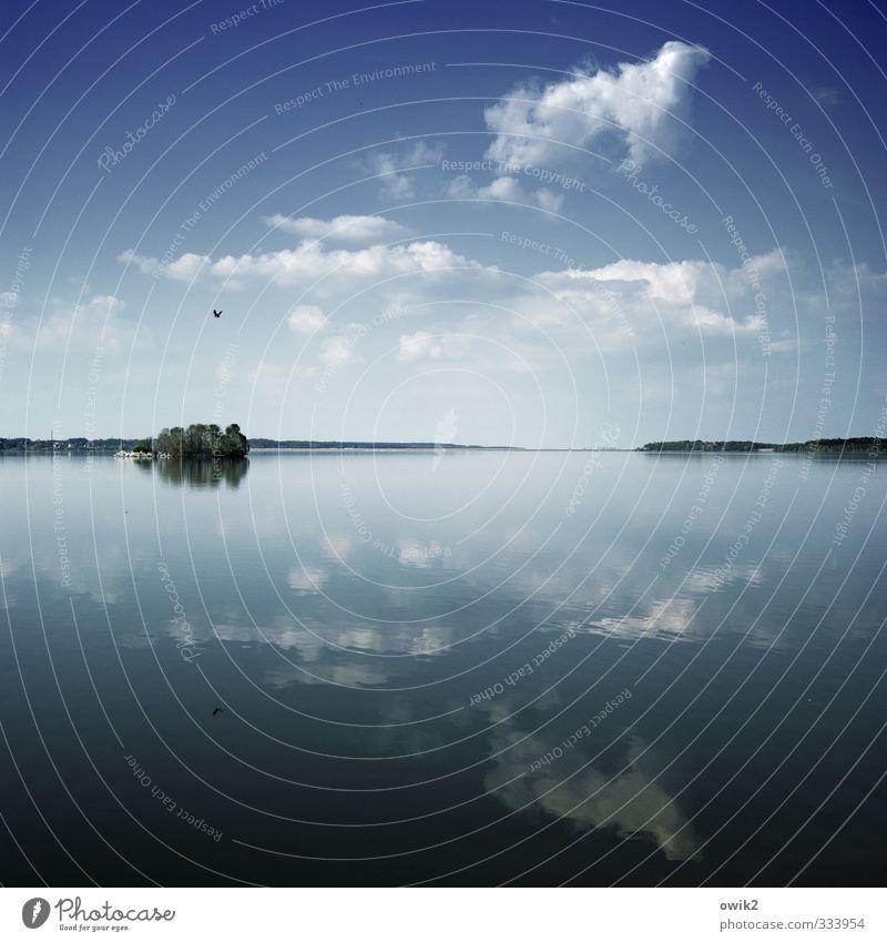 Birdland Umwelt Natur Landschaft Pflanze Tier Wasser Himmel Wolken Horizont Frühling Klima Wetter Schönes Wetter Baum Insel See fliegen blau Idylle Ferne