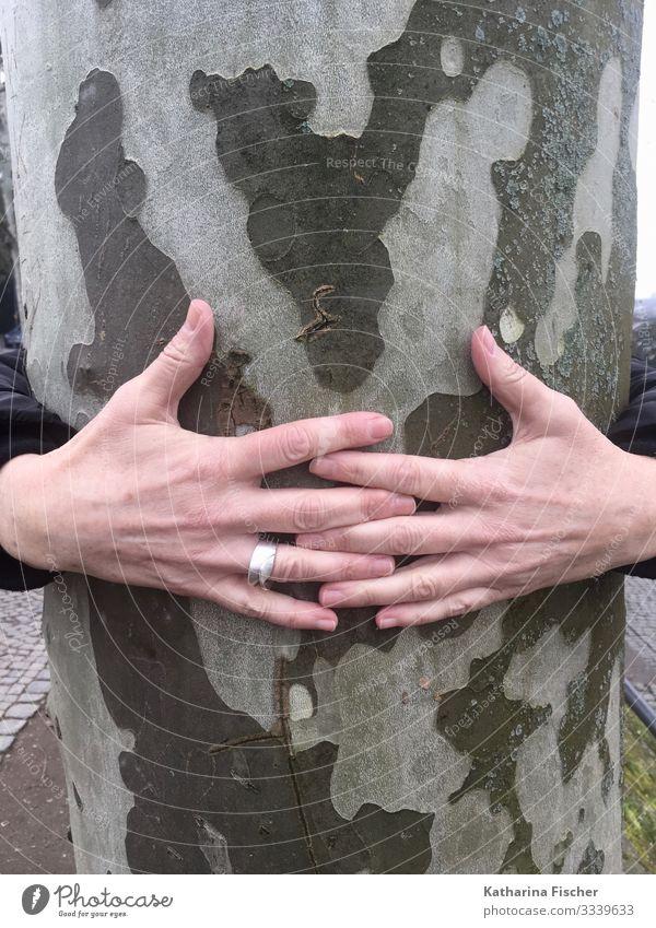 Hände Baumstamm Hand Finger Natur Frühling Sommer Herbst Winter Klima grau grün silber weiß festhalten Umarmen Naturliebe umfassen Farbfoto Außenaufnahme Morgen