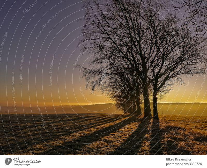 Lange Schatten Winter Natur Landschaft leuchten Verantwortung achtsam Gelassenheit Klima Leben Eifel Hürtgenwald Farbfoto Außenaufnahme Abend Sonnenlicht