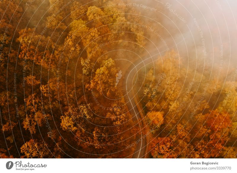 Luftaufnahme eines dichten Waldes im Herbst mit durchgeschnittener Straße schön Ferien & Urlaub & Reisen Ausflug Berge u. Gebirge Natur Landschaft Baum Blatt