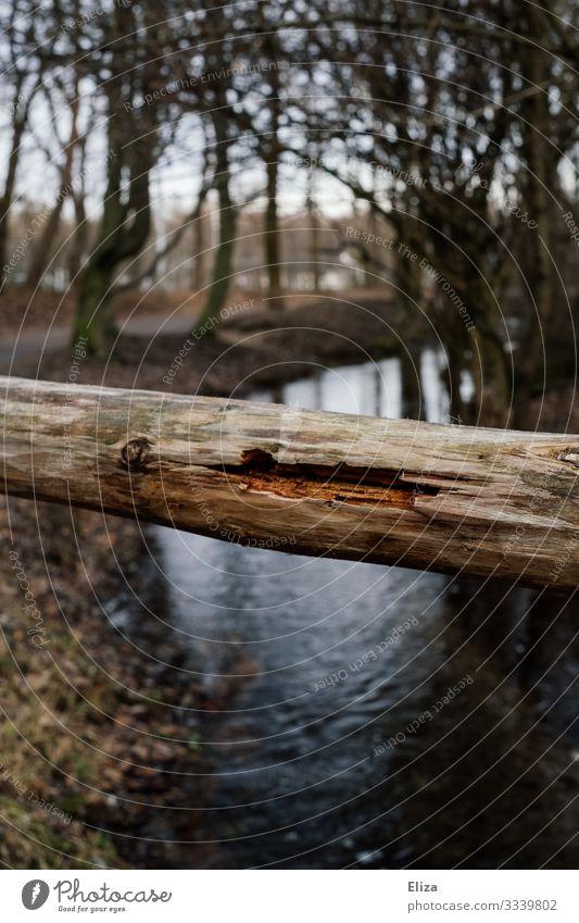 Baumstamm Bach Fluss Natur Holz morsch Barriere Geländer Farbfoto Außenaufnahme Menschenleer Textfreiraum unten Tag