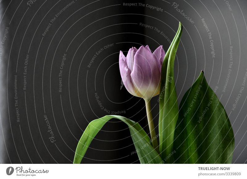 Es durch die Blume sagen... Lifestyle elegant Stil Freude Wellness harmonisch Wohlgefühl Zufriedenheit Erholung ruhig Meditation Duft Häusliches Leben Wohnung