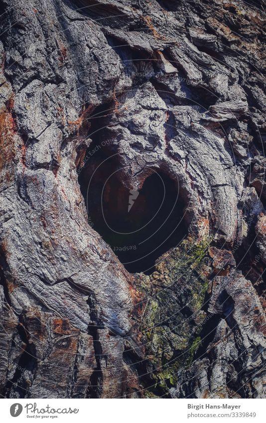 Ein Herz für Bäume Umwelt Natur Pflanze Baum Kitsch Krimskrams Holz Zeichen Liebe Sympathie Verliebtheit Romantik Naturwesen Farbfoto Gedeckte Farben