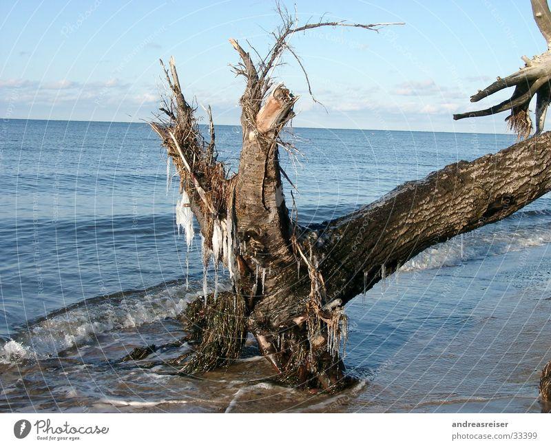 Winter an der Ostsee Natur blau Wasser Ferien & Urlaub & Reisen Baum Meer ruhig kalt braun Eis Frost Schönes Wetter Ast Baumstamm